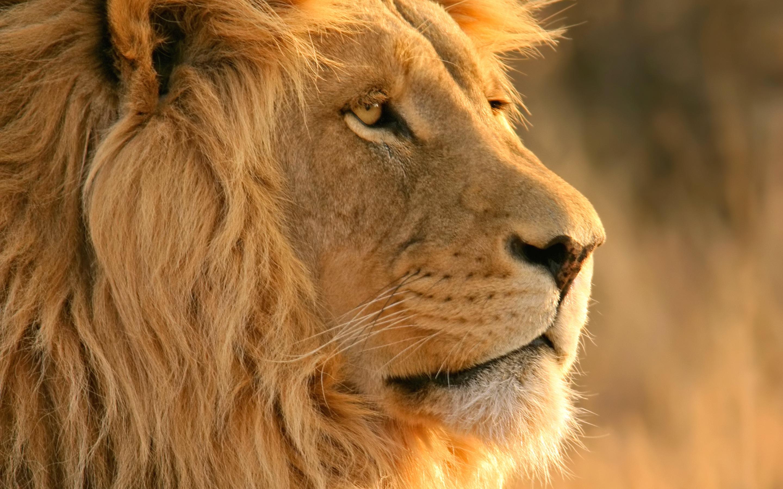 10 7 lion picture